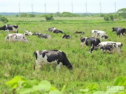豊富の酪農地帯