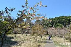 小萩園(1)