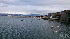 青森の港と白鳥