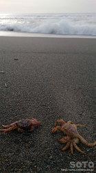 海辺とカニ
