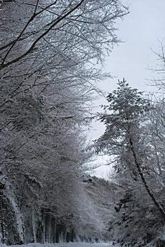 冬景色(3)