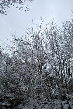 冬景色(4)