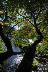 太郎湖に流れる川