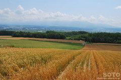 村上農園からの眺め