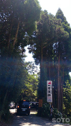 一寸法師の杉並木