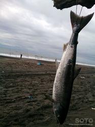 鮭釣り(2017/08/30)