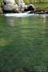 釣り堀(2)
