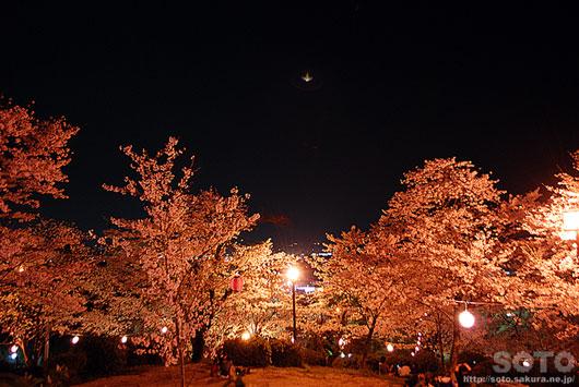 菊池の夜桜(3)