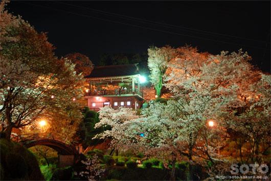 菊池の夜桜(5)