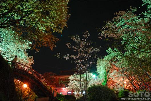 菊池の夜桜(6)