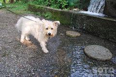 柿原養鱒場(犬OK)