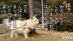 八景水谷公園(マリリン)