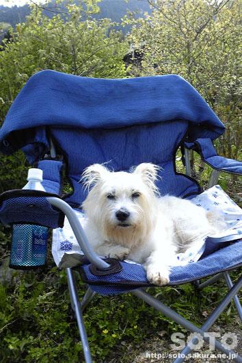 マリリンと青い椅子