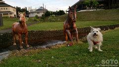 マリリンと馬の像