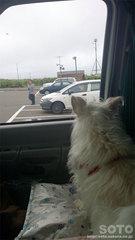 マリリン(車窓から)