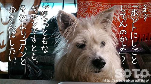 まりりん(2)