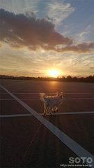 2013/12/15の夕陽とマリリン(1)