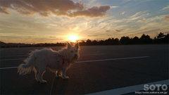 2013/12/15の夕陽とマリリン(2)
