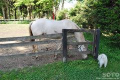 マリリンと馬