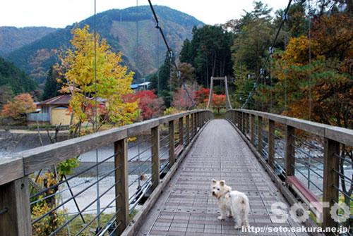吊り橋を渡るマリリン