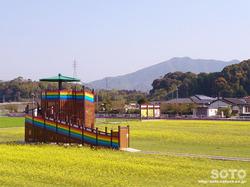 おおとう桜街道(菜の花畑)