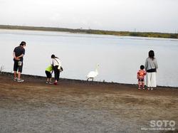 道の駅ウトナイ湖(7)