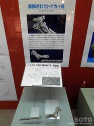 利尻町立博物館(13)