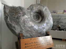 羽幌町郷土資料館(5)