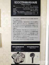 羽幌町郷土資料館(8)