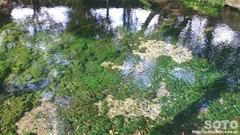池の川水源(4)