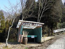 シャクナゲの森(2)