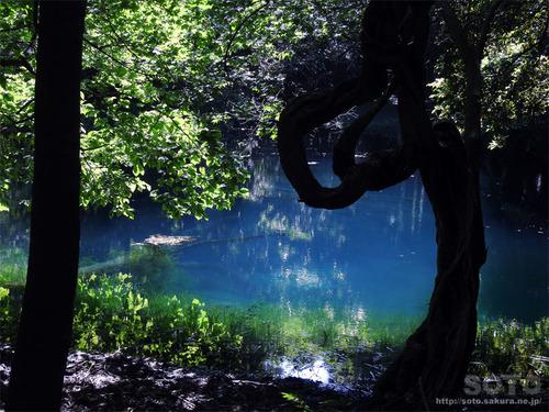 丸池様(1)