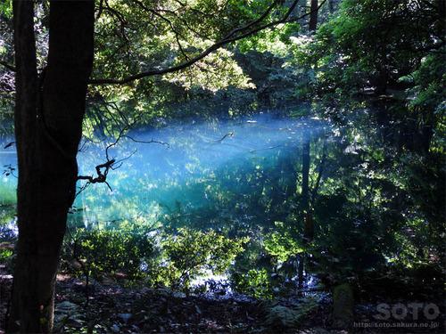丸池様(2)