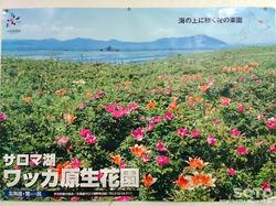 ワッカ原生花園(ポスター)