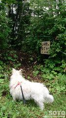 山仲間の愛犬チビの碑 入口