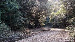 鮎返りの滝(3)