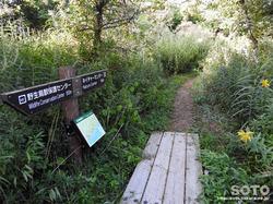 ウトナイ湖散策路(6)