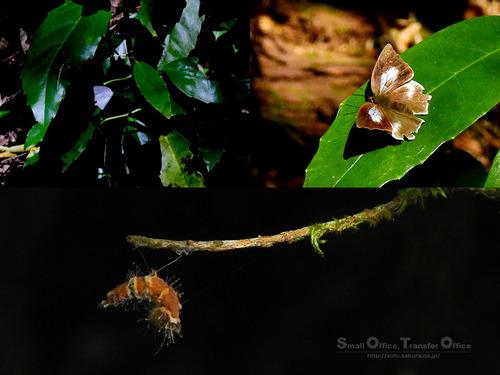 秋の菊池渓谷2020(07)