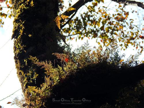 秋の菊池渓谷2020(14)