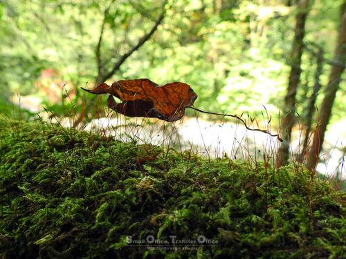 秋の菊池渓谷2020(15)