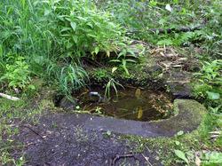 姫沼の湧水