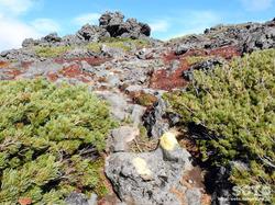 黒岳登山(桂月岳05)