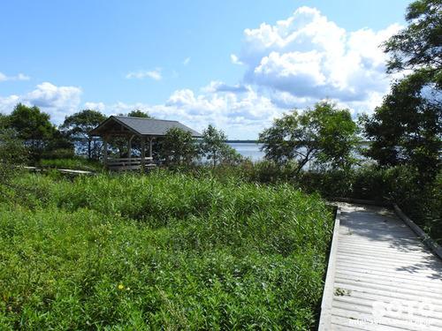 ウトナイ湖(自然観察路)