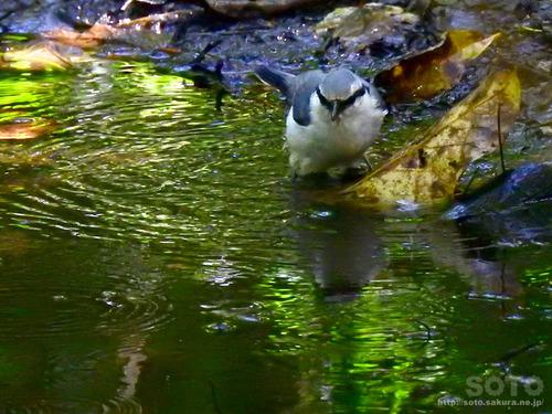 ウトナイ湖(野鳥2)