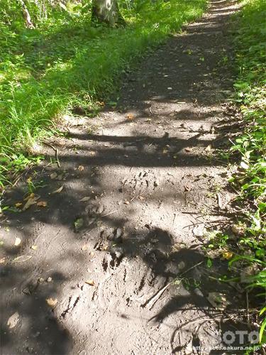 神社山 青葉公園(鹿の足跡)