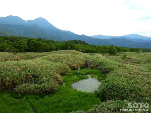 知床五湖高架木道(3)