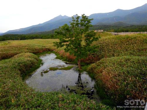 知床五湖高架木道(4)