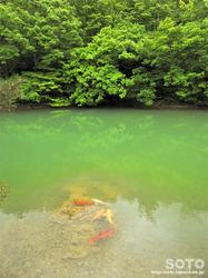 五智公園(4)