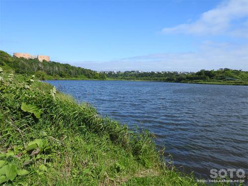 春採湖(01)