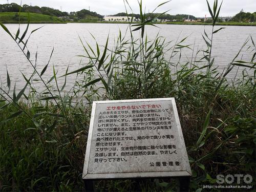 春採湖(03)